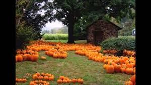 fall pumpkin wallpaper hd orange pumpkin fall song youtube