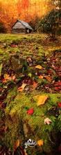 best 25 autumn pictures ideas on pinterest autumn leaves fall
