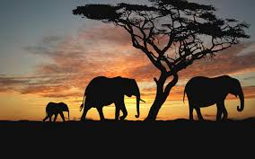 why i elephants hd desktop and desktop backgrounds