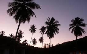 buttercups riverside wallpapers twilight palms wallpapers twilight palms stock photos