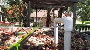 backyard ibc aquaponics fort worth texas youtube