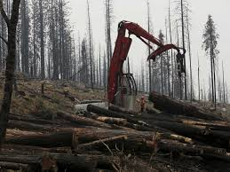 argument plan to sell burned california trees business insider
