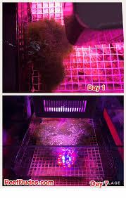 Refugium Light Evergrow Nova S2 Explosive Cheato Growth U2013 Reefdudes