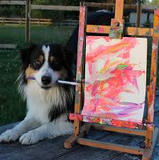 australian shepherd yoga from painting to yoga this dog can do anything humans can care