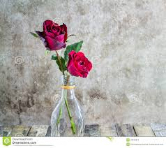 fresh red rose in glass bottle on wooden background stock photo