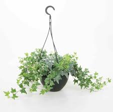 types of hanging house plants darxxidecom