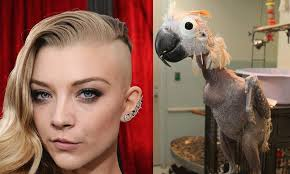 girls with skrillex haircuts are like sick parrots u2013 return of kings