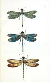 best 25 dragonfly illustration ideas on pinterest dragonfly