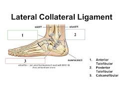 Lateral Collateral Ligament Ankle Muscles Of The Ankle And Foot Ppt Video Online Download