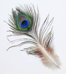 peacock feather butterfly drawing