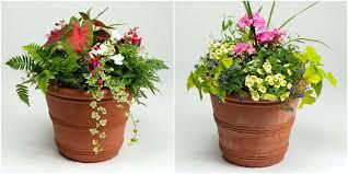 no sun plants patio plants blueberry for sale good florida designs