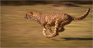 Which Cell Helps In Movement Of Bones Animal Locomotion Wikipedia