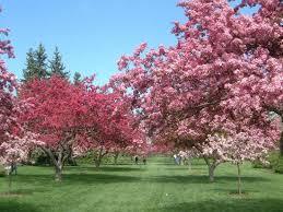 Botanical Gardens Niagara Falls Beautiful Cherry Blossoms At Niagara Parks Botanical Gardens