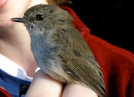 The Backyard Bird Company - the cost of backyard bird feeding