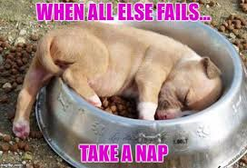 Pitbull Puppy Meme - sleeping puppy memes imgflip