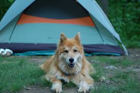 queen s dogs camping at rapidan u2013 john franklin u2013 medium