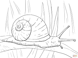 garden snail coloring page free printable coloring pages