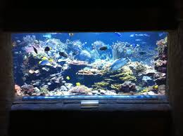 Reef Aquarium Lighting Island 20 000 Gallon Reef Tank 15 Years And Counting