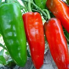 Pflanzen Fur Japanischen Garten Online Kaufen Großhandel Chili Pflanzen Aus China Chili Pflanzen