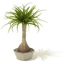 indoor palm tree 3d cgtrader