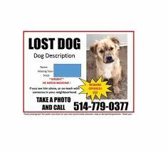missing dog flyer template