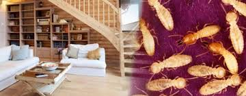 Interior Design Companies In Nairobi About Pest Control Services In Nairobi Fumigation Services In