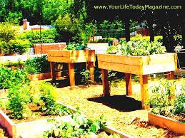 raised bed vegetable gardening for beginners uk the garden design