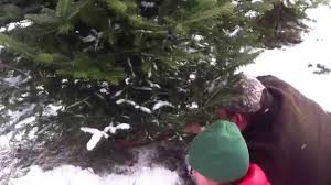 fun at henson u0027s hideaway tree farm in rome ohio 2014 youtube