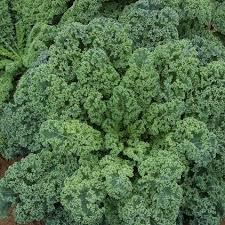 kale varieties pantry garden herbs