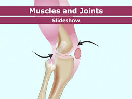 bones muscles and joints