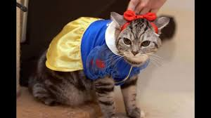 in costumes these animals in costumes and try not to laugh out loud