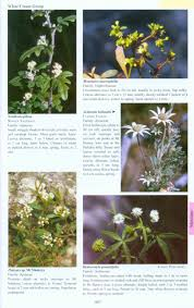 native queensland plants mangroves to mountains a field guide to the native plants of