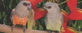 vital l full spectrum light for birds choosing a red bellied parrot petplace