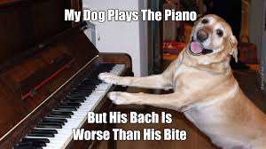 Piano Meme - piano playing dog by mememench meme center