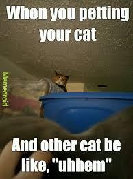Cat Problems Meme - cat problems meme by iga born memedroid
