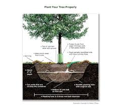 and community forestry planting trees in 12 easy steps tfs
