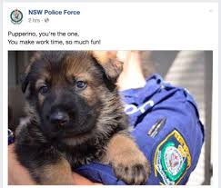 Meme Team - the nsw police department s meme team is back in full force