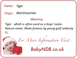 tiger name meaning origin history popularity and meaning of tiger