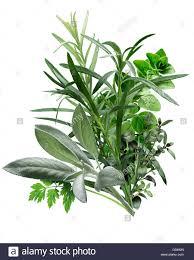 herbes cuisine herbes de provence a combination of chervil tarragon oregano