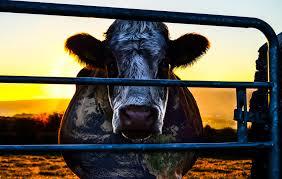 secr aire technique bureau d udes cowspiracy the sustainability secret