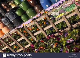 plant pots and flowers for sale at the early dawn nurseries garden