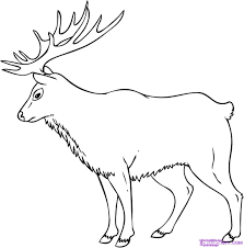 elk coloring pages elk coloring pages in animals coloring style
