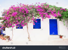 royalty free traditional greek house with flowers in u2026 391567201