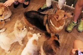 Small House Dogs Bau House Dog Cafe U2013 The Kimchi Fairy