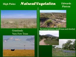Texas vegetaion images Coastal plains north central plains great plains mountains and jpg