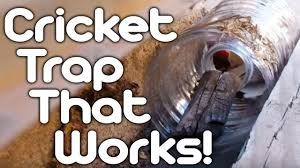 cricket trap that works youtube
