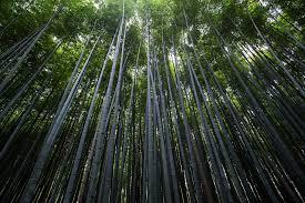 free photo plants trees bamboo slender free image on pixabay