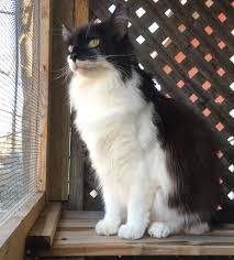 Patio Enclosures Buffalo Ny by Catio Hacks Every Cat Owner Should Know