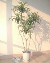 25 Easy Houseplants Easy To by Download House Plant Tree Solidaria Garden