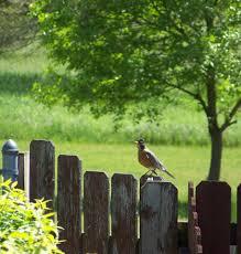 free images tree nature bird fence warm summer wildlife